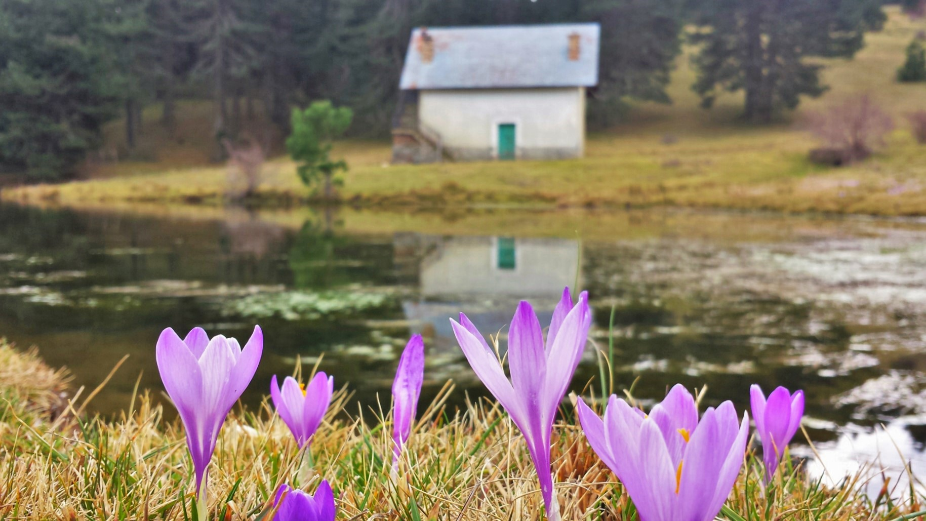 Il fiore che annuncia la primavera