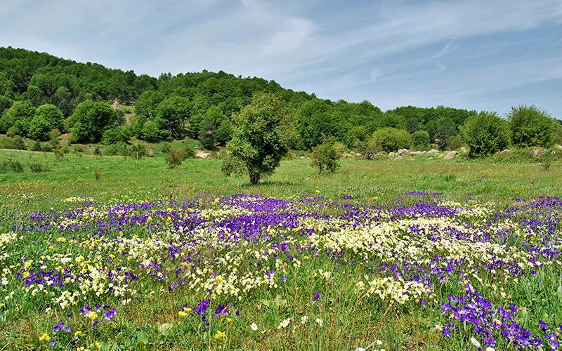 La nostra primavera sull'Altopiano Silano