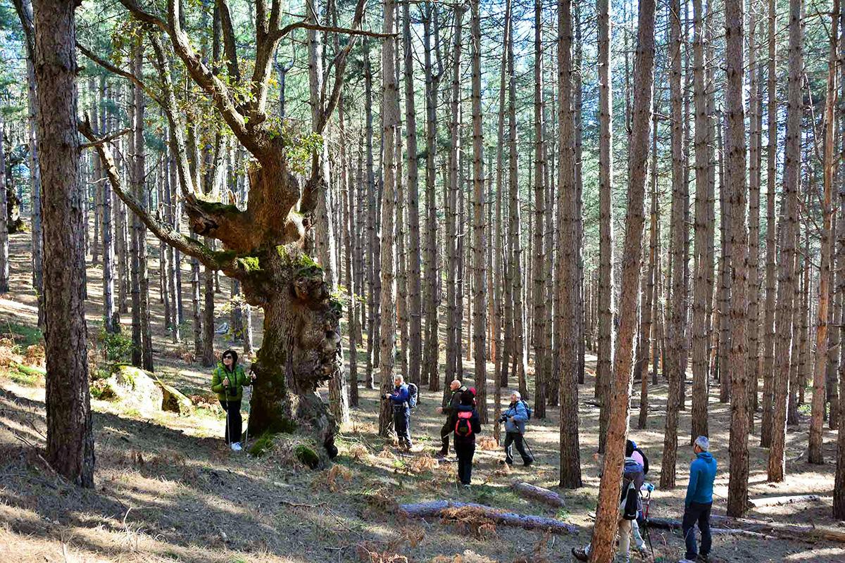 """Un Bagno Nella Foresta Per Combattere Lo Stress lo """"Shinrin-yoku"""""""