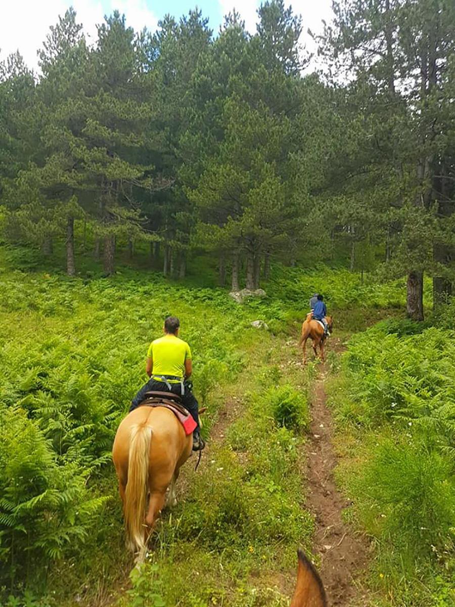 Passeggiata a cavallo in Sila 2
